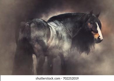 heavy draft horse