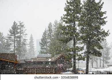 Heavy falling snow over evergreen trees, South Lake Tahoe, Sierra Mountains, California