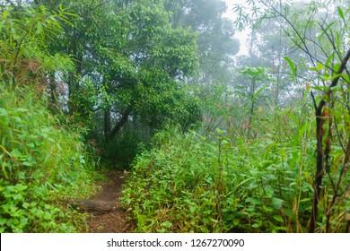 heavy fog, cloud and mist in tropical rainforest in mon jong doi at Chaing mai, Thailand