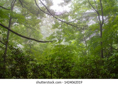 Heavy fog from a recent rain storm masks a thick forest in the summer
