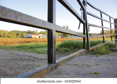 A heavy metal gate, lock and chain are used to secure the entrance to a farm/Keeping the Farm Safe and Secure/A heavy gate and chain are used to secure a farm.