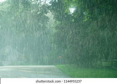 heavy rain and green tree in summer