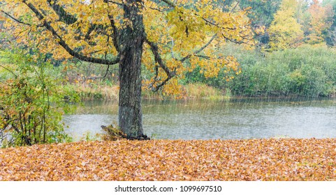 Heavy rain on New England foliage scenario.