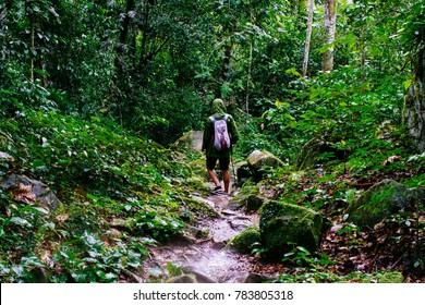 Heavy rain on a trekking trip through the amazon jungle in north peru( Tarapoto/ Peru/ South America