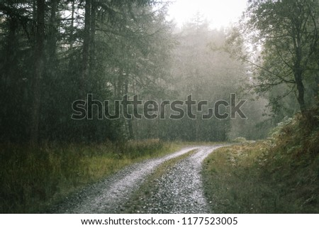 3b6934e546161 Heavy Rain Scottish Wood Stock Photo (Edit Now) 1177523005 ...