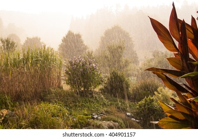 heavy rainfall storm in countryside garden with blooming flowers and trees in the late summer