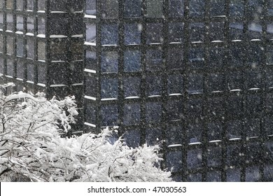 heavy snow blizzard showing tree and glass office building