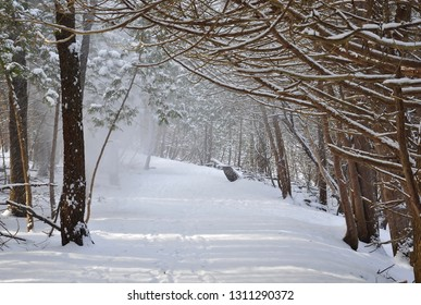 Heavy snow fall in path with trees