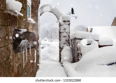 Heavy snow and freezing temperatures, photographed in a back garden