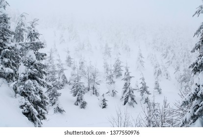 Heavy snow at Jeseniky Mountains