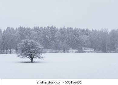 Heavy snowfall during the winter at the forest nearby Stockholm, Sweden.
