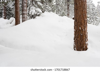 heavy spring snow falls in Tahoe burying trees