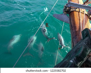 School Of Dolphins Images, Stock Photos & Vectors   Shutterstock