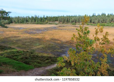 Randbøl Hede, Denmark. October 7, 2018. In the middle of this heath in Southern Jutland there is a bog  called The Seven Year Lakes. Approximately every seven years the lakes emerge from the ground.