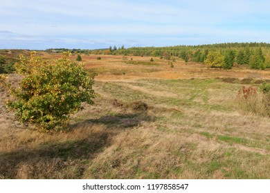 Randbøl Hede, Denmark. October 7, 2018. 750 hectares of beautiful protected heath landscape. The vegetation is low-growing and dominated by heather.