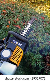 hedge cutter trimming. petrol machine for gardening and prune foliage