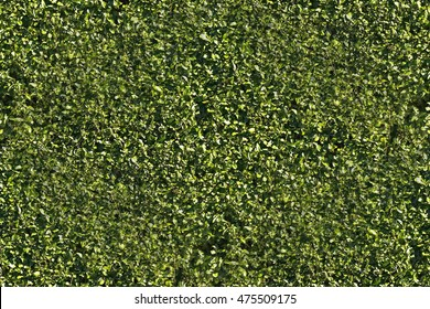 hedge foliage wall texture seamless background
