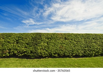 Hedge - like you would find near a mansion