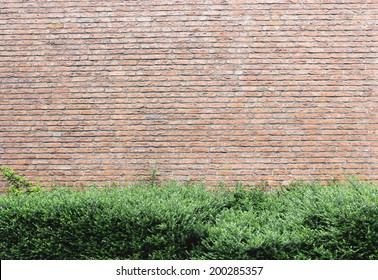 hedge over brick wall background