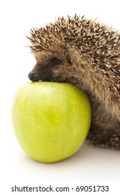 A hedgehog is any of the small spiny mammals of the subfamily Erinaceinae and the order Insectivora.