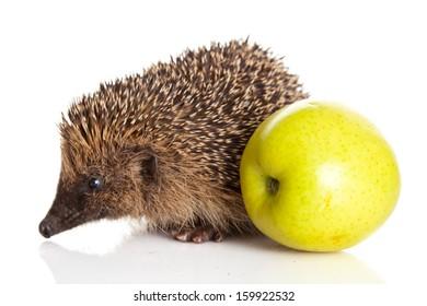 Hedgehog with apple