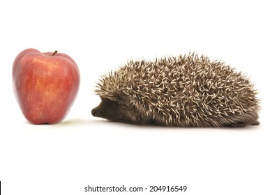 Hedgehog and an apple
