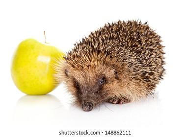 hedgehog with an apple.  hedgehog isolated.