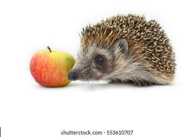 Hedgehog with apple isolated on white background. Macro, close-up