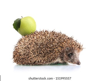 Hedgehog with apple on back isolated on white