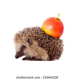 Hedgehog with apple on her back isolated on white background