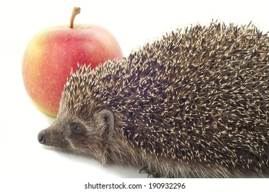 Hedgehog and apple on a white background closeup