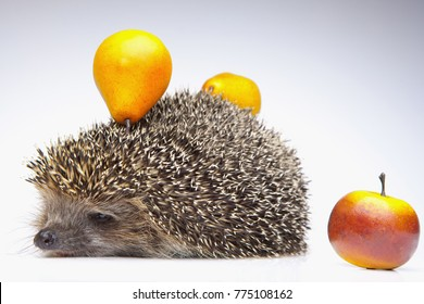 hedgehog with apple and pearl