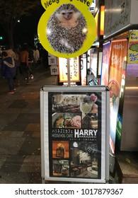 Hedgehog Cafe Harry Harajuku in Omotesando, Tokyo - 23rd January 2018