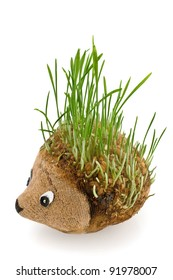 Hedgehog with germinating wheat grass instead of the spines on white