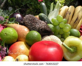 Hedgehog on the fruit and vegetables pile.