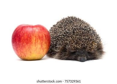 hedgehog and red ripe apple on a white background. horizontal photo.