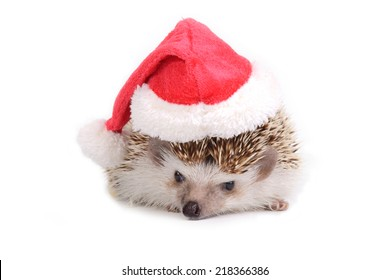 Hedgehog with red santa claus hat on white background.