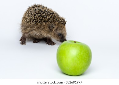 Hedgehogs do not eat apples, isolated on white