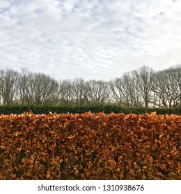 Hedgerows with brown leaves and bare trees under a cloudy winter sky in the morning