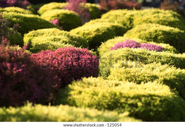 Hedges of different types growing in display garden