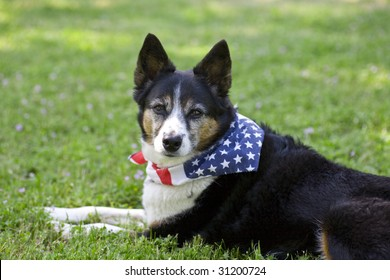 Heeler Mix Breed Dog with Flag Bandanna