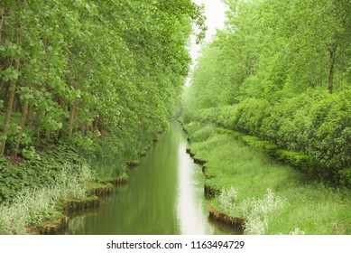 Hefei Binhu Forest Park