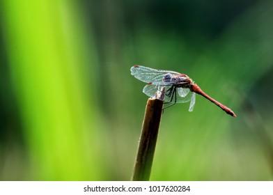 heidelibelle dragonfly licht farben