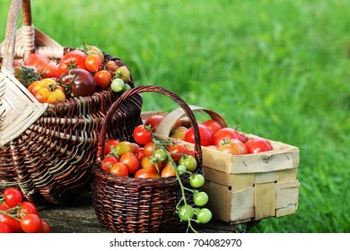 Heirloom variety tomatoes in baskets on rustic table. Colorful tomato - red,yellow , orange. Harvest vegetable cooking conception. Full baskets of tometoes in green background