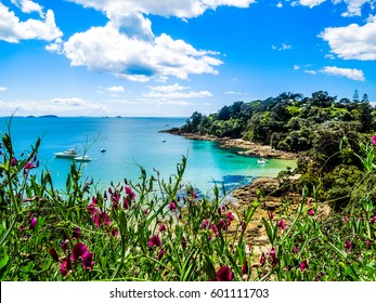 Hekerua Bay on Waiheke Island in New Zealand with sail boats on the water below and pretty purple flowers in the foreground. Taken on a bright summer day