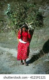 HELAMBU, NEPAL - OCT 15, 1986 - Nepali woman carrying forage back to her village, Helambu Himalayas,Nepal, Asia