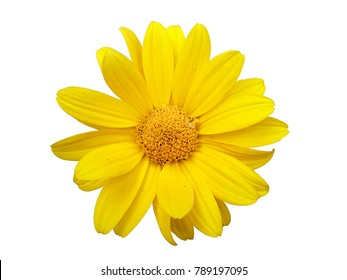 Heliopsis yellow flower isolated on white.
