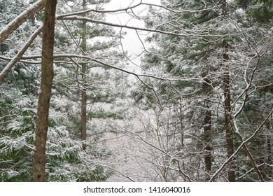 Hell Valley, Jigokudani. Landscape of the famous beautiful nature of snow winter in Jigokudani Monkey Park at Yamanouchi in Nagano, Japan.