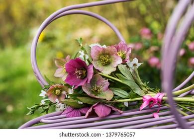 Helleborus flower bouquet on a garden chair