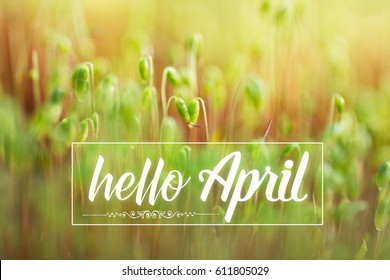 Hello April card. Fresh green spring plant, Soft Focus